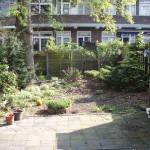 Mijn originele achtertuin, de eik moest weg van de gemeente