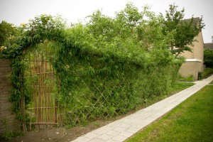 Groene wilgentenenschutting, Foto: The Greenman Project