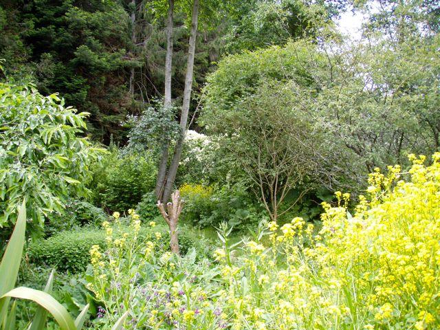 Forest Garden Martin Crawford, Dartington UK
