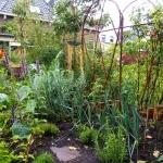Wilgenboogjes voor klimplanten