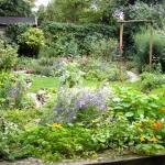 Kleurige tuin