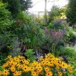 De tuin in augustus