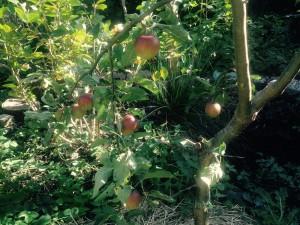 Mijn appelboom is het succesnummer van dit najaar!